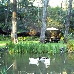 The duckpond in the garden, with the house up the back.