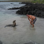 Sea lion on Florenea island