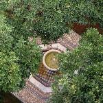 The fountain and its orange trees
