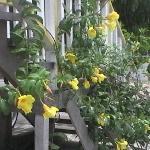 Beautiful Yellow Bella...