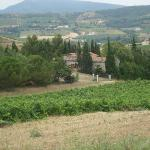 Looking onto Domaine St Georges from vineyards behind