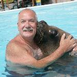 Walrus and sealion