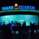 Sharks World!