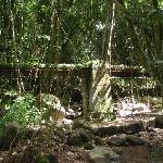 por la jungla