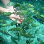 thanks to my underwater cam...