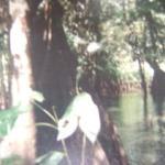 Kourou River Image