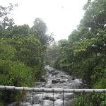 From the swinging bridge