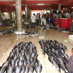 Male Fish Market