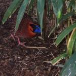 Nashville Zoo Φωτογραφία