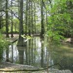 Una piccola parte del Parco Bucci a Faenza