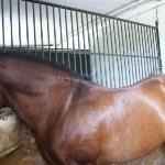 Les chevaux de L'Hotel.