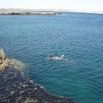 Foto de Punta Delgada Lighthouse
