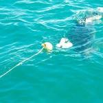 South Africa. Gansbaai. Tubarão-branco.