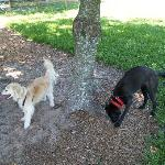 Dogs at park area