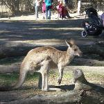 roam with the kangaroos