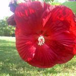flower from her garden