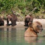 RML Mama bear & cubs