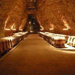 Wine cellar in Portel-des-Corbières