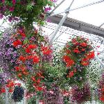 baskets in greenhouse