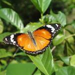 Butterfly center 2