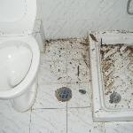 rep toilet when ceailing fell doen