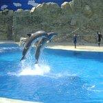 Delfines hermosos