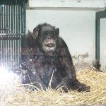 Jojo le singe de la pépinière de Nancy  il a passé 80ans!!!