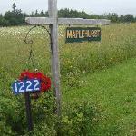 Welcome to Maplehurst