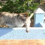 Donkey behind the Blue casita.