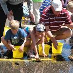 Turtle races in Nisswa