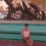 Aquarium of Veracruz ภาพถ่าย