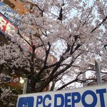 Nishi-Magome on 2009, April 5th The Cherry Blossoms (Sakura), bloomin' in front of PC Depot