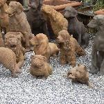 Dog Town concrete sculptures
