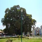 El árbol del Tule sin niños alrededor. Un fraude.