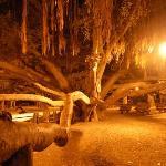 The great banyan tree of Lahaina