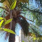Palm Tree over pool and gardens