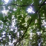 Foto de Millersylvania State Park