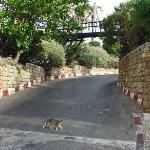 """Wishing Bridge,"" Jaffa"