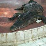Photo de Samutprakan Crocodile Farm and Zoo