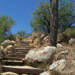 Catalina State Park Photo