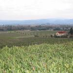 View from Signorello over the vineyard