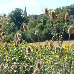 Montmaur above the sunflowers