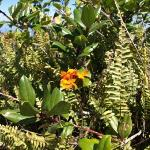 Reserva Natural Volcán Mombacho: beautiful flowers like bromelias, orchids,..