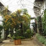 interiour of the Camelia House