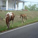 Horses roam freely around the island... got a pic of these two in front of the hotel