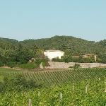 Villa La Grotta nestled in the vineyard