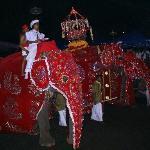 Perahera in Kandy, das größte buddhistische Fest der Insel im Juli/August