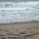Zuma Beach again... with a bunch of little birds!