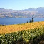 Miission Hilll vineyard