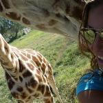 Que linda jirafa!!! casi me da un beso